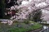 Sakura20100401
